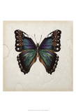 Butterfly Study III Prints by Melissa Wang