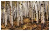 Aspen Woods Print by David Drost