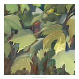 Leaf Array I Giclee Print by Sandra Iafrate