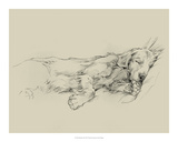 Dog Days III Lámina giclée por Ethan Harper