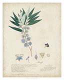 Delicate Blue Descubes I Giclee Print by A. Descubes