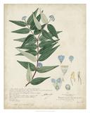 Delicate Blue Descubes II Giclee Print by A. Descubes