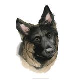 Human's Best Friend II Giclee Print by Grace Popp