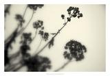 Photography/Landscape 154 Poster par Inc, DAG
