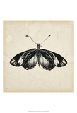 Butterfly Study VI Prints by Melissa Wang