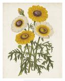 Vintage Garden Beauties III Giclee Print by Horto Van Houtteano