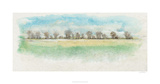 Treeline Impressions II Limited Edition by Tim O'toole