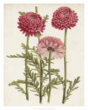 Vintage Garden Beauties I Giclee Print by Horto Van Houtteano