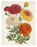 Vintage Garden Beauties II Giclee Print by Horto Van Houtteano