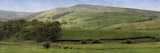 Valley Horses Panoramic Giclee Print by Pete Kelly