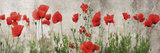 Wild Poppy Panorama Giclee Print by Pete Kelly