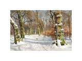 In Charlottenlund Forest Premium Giclee Print by Peder Mork Monsted