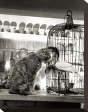 Child, Cat and Dove Reproduction sur toile tendue par Robert Doisneau