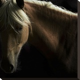 Spirit Horse Stretched Canvas Print by Tony Stromberg