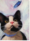 Cat and Butterfly Stretched Canvas Print by Diane Hoeptner