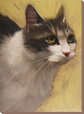 Derby Cat Stretched Canvas Print by Diane Hoeptner