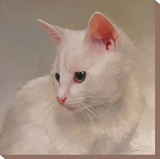 White Kitten Stretched Canvas Print by Diane Hoeptner