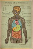 Anatomy Of A Politician Affiches