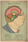 Brain Of Putin Posters