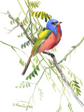 Painted Bunting Posters by Suren Nersisyan