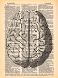 The Brain Art by  Book Dictionary Art