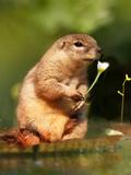 Squirrel Love Prints by  Wonderful Dream