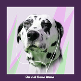 David Bow Wow Prints by Noah Bay