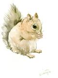 Squirrel Posters by Suren Nersisyan