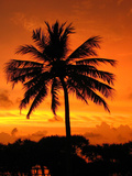 Sunrise with Palm Tree Art by  Wonderful Dream