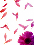Single Pink Flower Posters by  Grab My Art