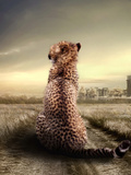 Wildlife African Cheetah Posters by  Wonderful Dream