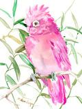 Cockatoo Posters by Suren Nersisyan
