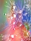 Flower Dandelion Seedhead 3 Posters af  Grab My Art