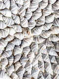 Mussels Shells Posters by  Grab My Art