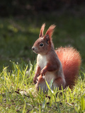 Cute Squirrel Mammal Posters by  Grab My Art