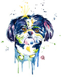 Shihtzu Posters by Lisa Whitehouse
