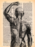 Superficial Muscles Art by  Book Dictionary Art