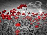Idyllic Field Of Poppies With Sun Stampa di Melanie Viola