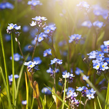 Forget Me Not - Square Prints by  Lebens Art