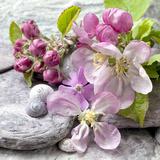 Apple Blossom - Square Kunstdrucke von  Lebens Art