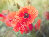 Poppy Flower Meadow Prints by  Grab My Art