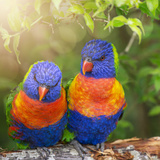 Lory Birds - Square Posters by  Lebens Art
