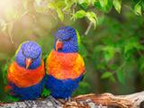 Lory Birds Prints by  Lebens Art
