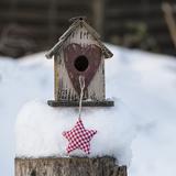 Bird House Winter - Square Art by  Lebens Art
