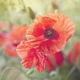 Poppy Flower Meadow - Square Posters by  Lebens Art