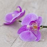 Orchid Pink - Square Affischer av  Lebens Art