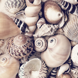 Sea Shells - Square Poster by  Lebens Art