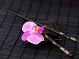 Zen Orchid Poster by  Lebens Art