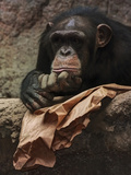Thoughtful Chimpanzee Posters by  Lebens Art