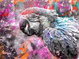 Crazy Parrot Affischer av  Lebens Art